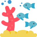 Seeing coral