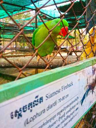 Phnom Tamao Zoological Park and Wildlife Rescue Center
