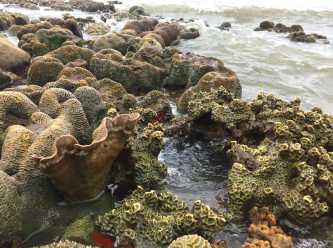 Coral Sea Location