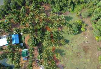 Mlob Kongkang Mangrove Shade Camping