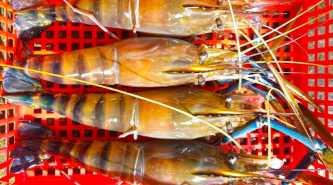 Boeng Sopheakmongkol Takeo Restaurant