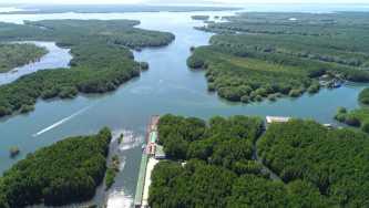 Mangrove Sanctuary Resort