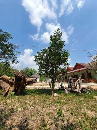 Tree Bungalow