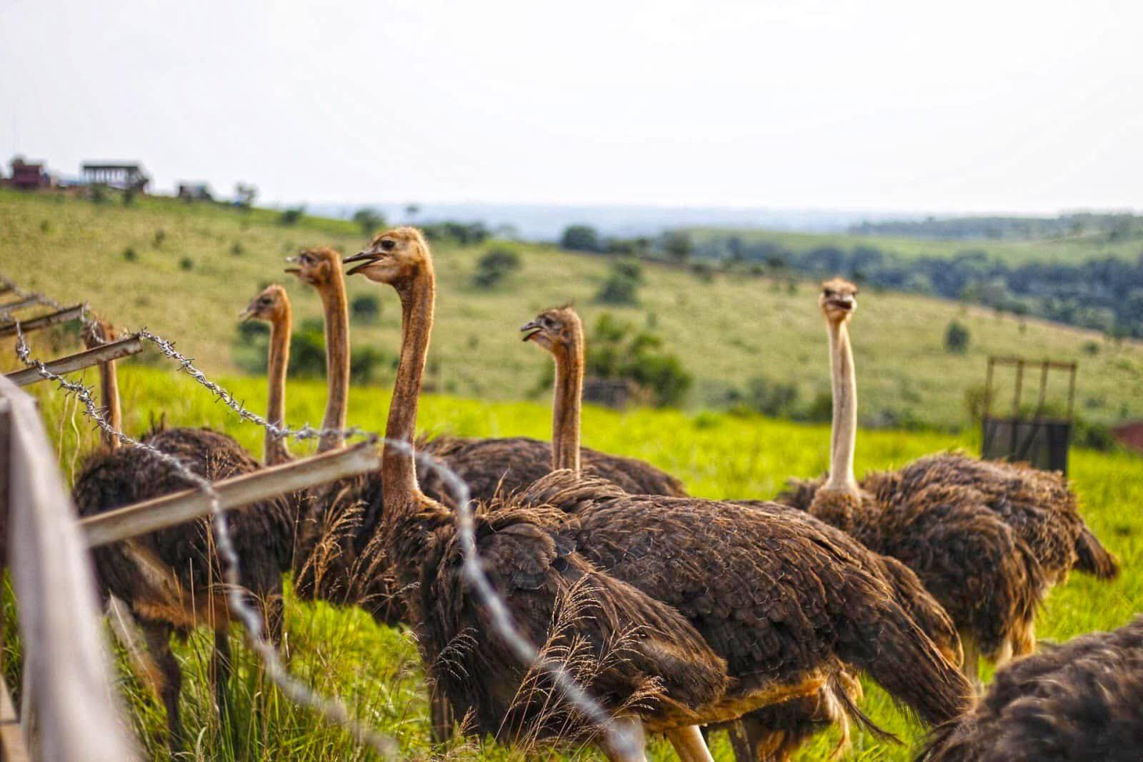 Ostrich Zoo